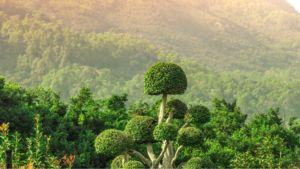 Dschungel in Krabi